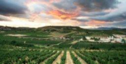 Viñedo-Vineyard RIOJA (1).jpg